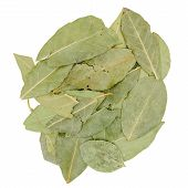 foto of bay leaf  - Group of dried green bay leaf isolated on white background - JPG