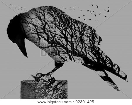 Double Exposure of Crow and Tree