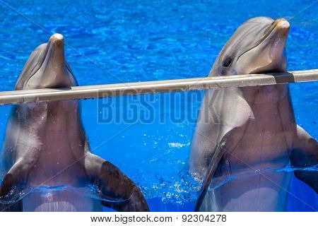 Two cute happy dolphins