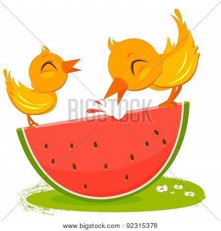Birds eating watermelon