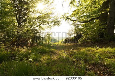 Beauty Forest With Sunrays