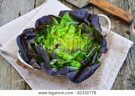 Oak Leaf lettuce for vegetarian salads