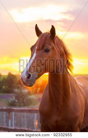 Red horse at sunset