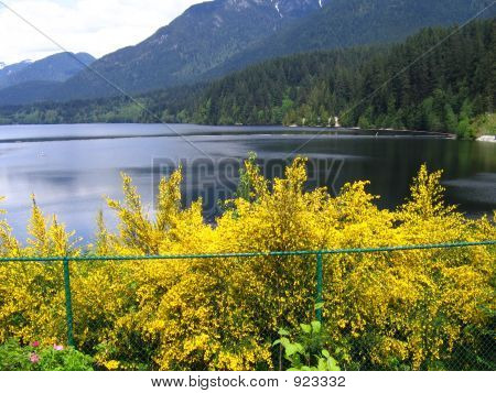 Spring Lake And Blossoming Yellow Flowers