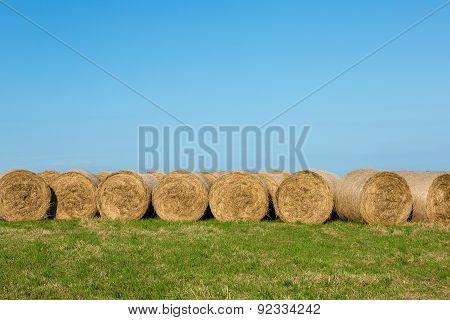 Hay Bales in Afternoon Sunshine against Horizon Landscape
