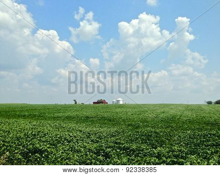Soybean Farm