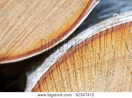 Sawn Up Tree, Cork Layer Close-up, Abstract Background