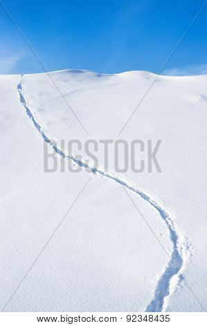 Traces In The Fresh Snow