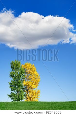 Autumn Landscape. Yellow And Green Tree In The Field Against The Sky.