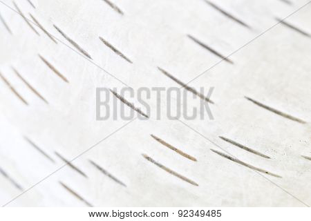 Birch Bark, Natural Background
