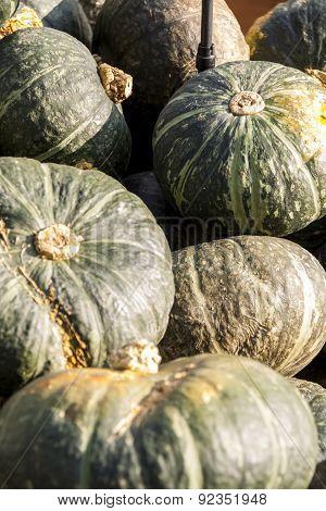 Green Grüner Hokkaido Cucurbita Pumpkin Pumpkins From Autumn Harvest