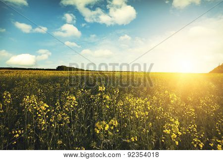 Large beautiful spring the field with a distant kind on a forest and dark sky