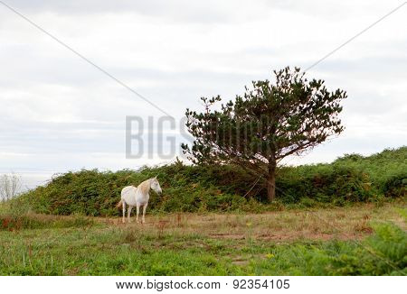White horse in a meadow with trees