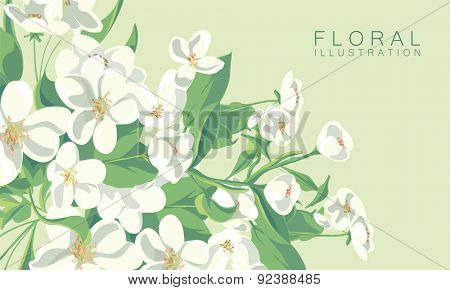 floral illustration of apple tree blossom