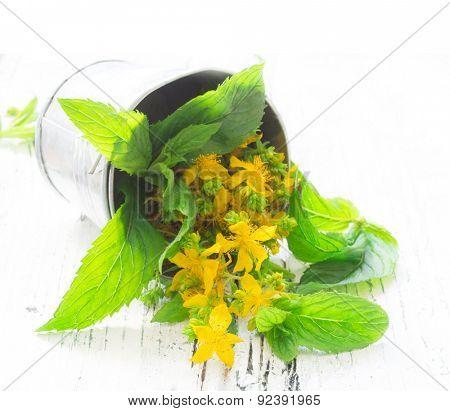 St John's wort, healing plant