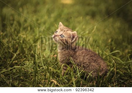 little baby cat looking very sad while staning in a grass field