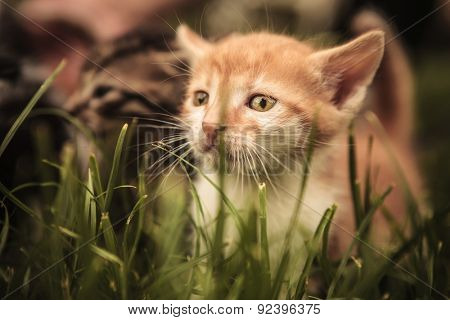 sad baby cat looking away while standing in the grass