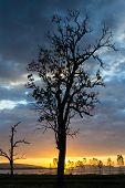 picture of fantastic  - Fantastic silhouette tree in sun rise Thailand  - JPG