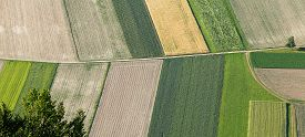 picture of land development  - Freshly plowed and sowed farming land from above neatly cultivated in non - JPG
