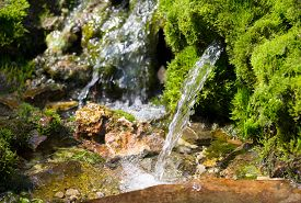 picture of groundwater  - source of spring water in a forest, fragment of wildlife