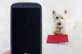 foto of westie  - Smatrphone and a Westie dog on blurred background - JPG