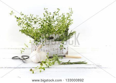 Fresh cut garden herbs (rosemary thyme parsley Garlic) in white wooden box on wooden kitchen table