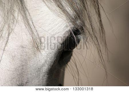 Detail of  cute the roan horse head