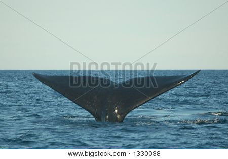 Whale Tale Diving