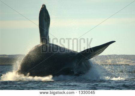 Monster Whale Flying