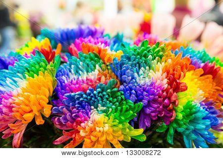 Multicolored marguerites