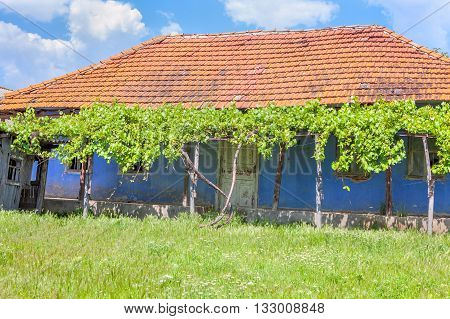 old abandonated house with green yard in village