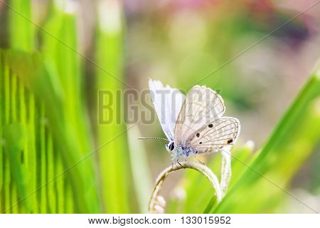 Butterfly  in the fields on the background.