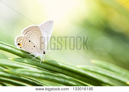 Butterfly in spring.summer Conventional butterfly yellow perch on flowers yellow chrysanthemum in the fields on the background.