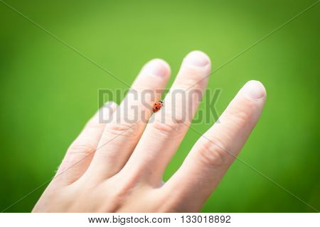 Ladybird on hand on the green background