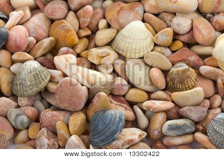 background From Seashells And Stones