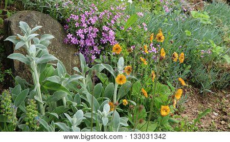 Flowering rock garden in spring close up