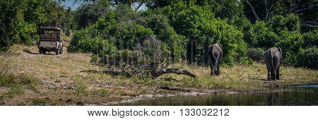 Two Elephants Walking Along Riverbank With Jeep