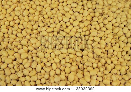 The soy bean pattern as a background