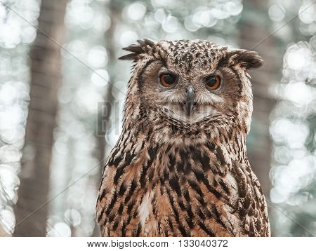 Owl looking directly at the camera on the background of trees.
