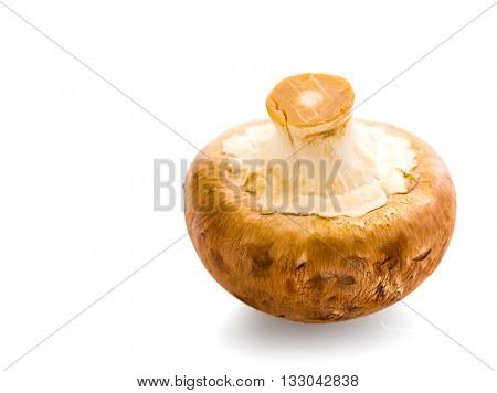 natural mushrooms champignons isolated on white background