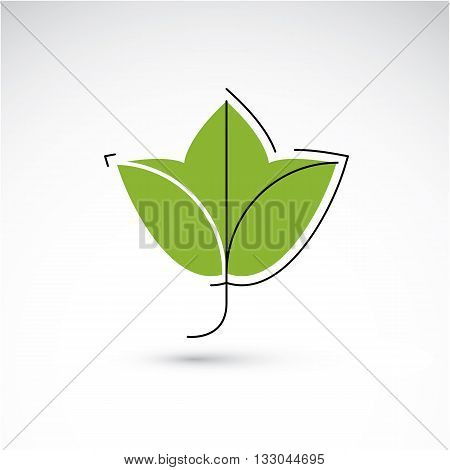 Hand-drawn Illustration Of Simple Maple Tree Leaf Isolated. Green Foliage, Spring Herb. Vector Botan