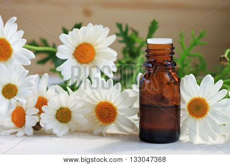 Chamomile tincture essential oil in cosmetic bottle. Fresh chamomile flowers. Botanical beauty care product.