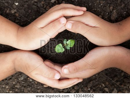 child hands protect soil with sprout of tree
