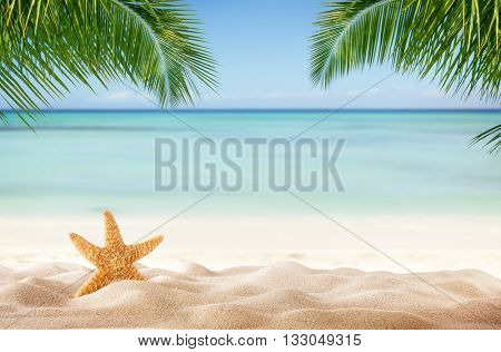Tropical beach with sea-star in sand, copyspace for text. Concept of summer relaxation