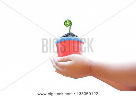 child hands holding pot with sprout isolated on white background ( clipping path )