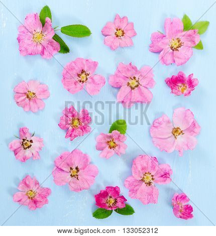 Flat Lay Composition With Pink Flowers Dog-rose