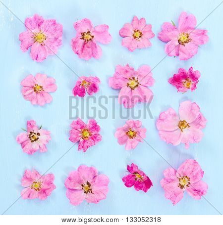 Flat Lay Composition With Pink Flowers