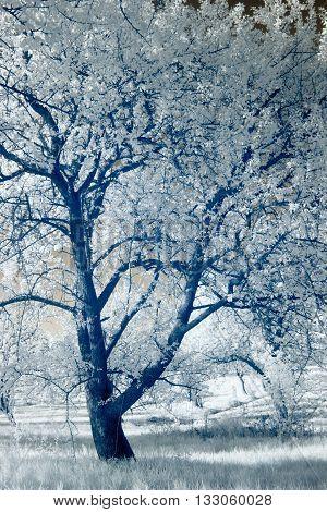 Infrared Photography; Landscape; Park; Garden;