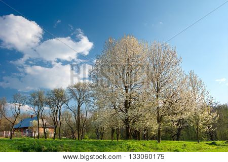 Spring; Trees; White Color; Village;