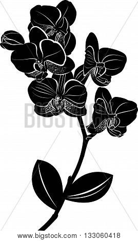 orchids. vector illustration. Isolated orchids on a white background. Orchids. Orchid flowers.